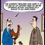 190726-Bonus-Chickens
