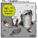 Yin + Yangster, Laura Yang, Canada