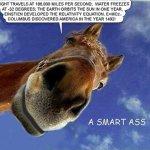 A smartass