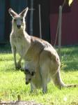 Australian Animals from Hell