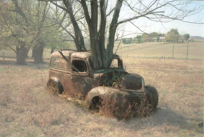 Old car with tree growing through it