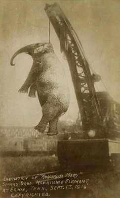 The Day They Hanged An Elephant