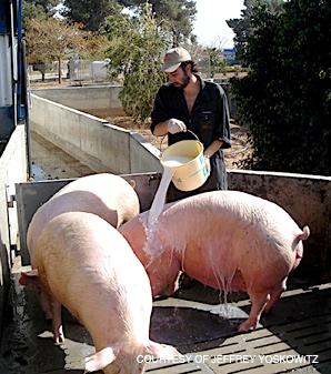 god and pork