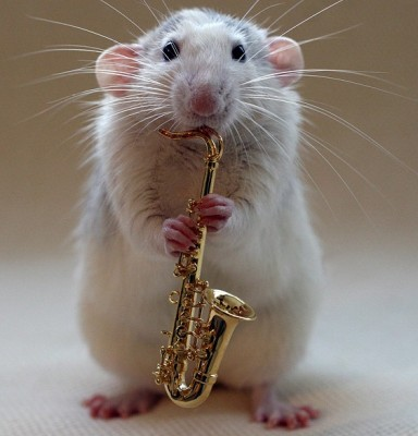 National Rat Association, NRA, likes sax.