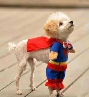 superman, superdog