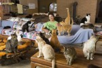 Valentine's Day: Recently Divorced Woman Happy with Cats