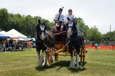 543_Clydesdales on ceremonies field-LR