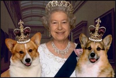 Queen Corgis