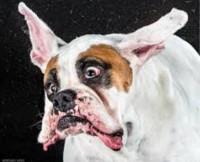 South Dakota County Clerk Marries Dog, As Promised