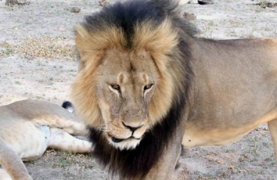 Jericho, Brother of Cecil the Lion