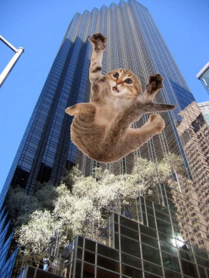 Trump Tower kitten