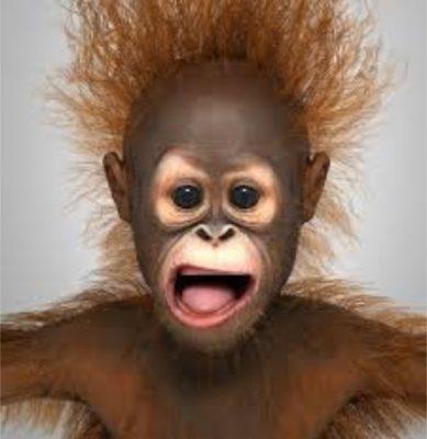 Donald Trump as a baby Orangutan