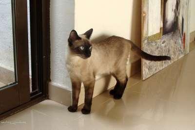 Election Stress, cat