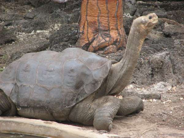 Mitch McConnell Returns to Galápagos Islands to Save His Species