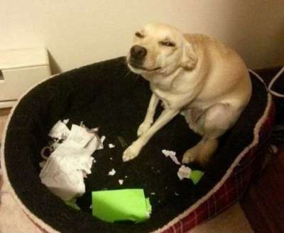 dog ate homework syllabus