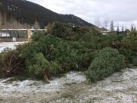 Mass Grave of Mysteriously Destroyed Evergreen Trees Found
