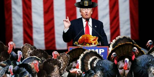 pro-Trump turkeys