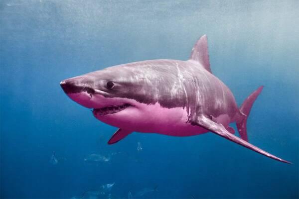 Great Black Sharks Union Files Discrimination Suit Against News Outlets