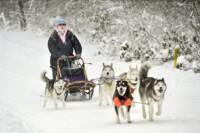 The Jerry Duncan Show Interviews an Alaskan Sled Dog Musher