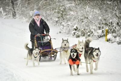 sled dog musher