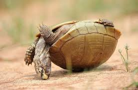 Turtle Family Reunion