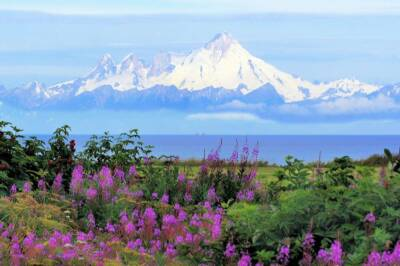 Alaskan wildlife biologist