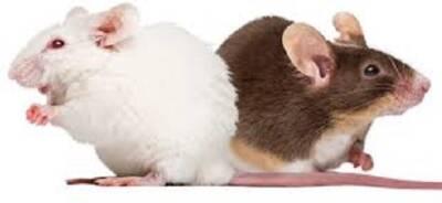 Cheesy Lab Mice Save the World